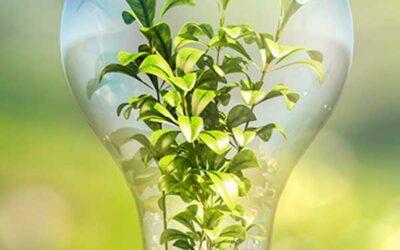 La electricidad generada mediante las plantas
