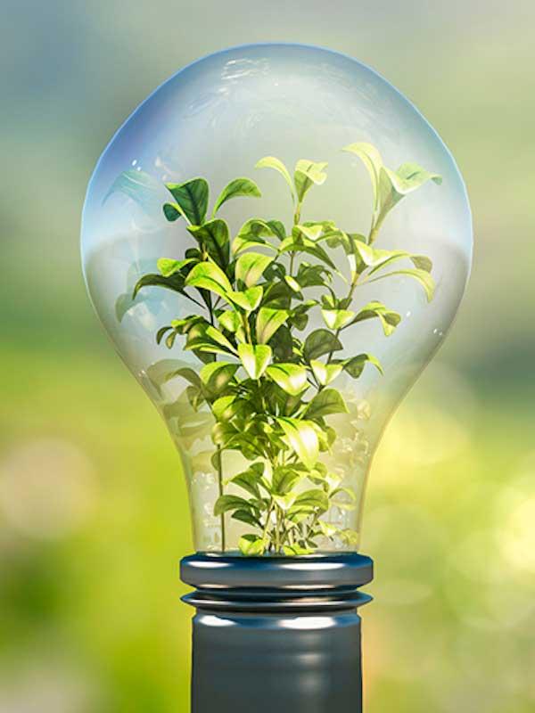 La electricidad mediante las plantas