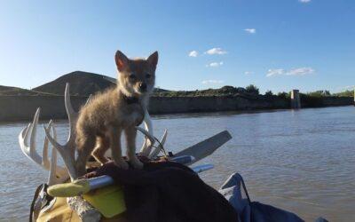 Salva a un cachorro de coyote que se ahogaba y viajan durante 10 días en balsa