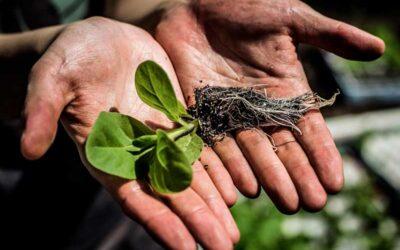 Científicos logran clonar la fotosíntesis para producir más alimentos
