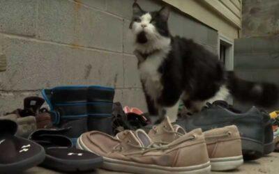 Gato ladrón roba zapatos a sus vecinos y su dueño crea un grupo de Facebook para devolverlos