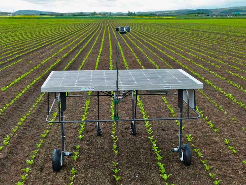 El fin de los herbicidas cada vez mas cerca gracias a estos robots anti malas hierbas