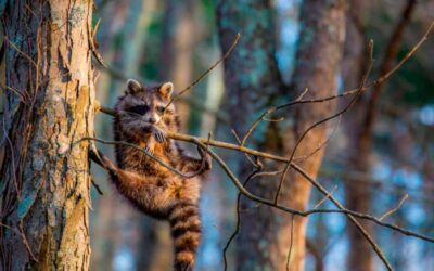Las fotografías de la fauna salvaje más graciosas de 2020
