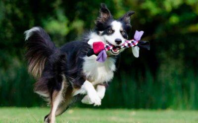 """Experimento """"Genius Dog Challenge"""", conoceremos al perro más inteligente del planeta"""