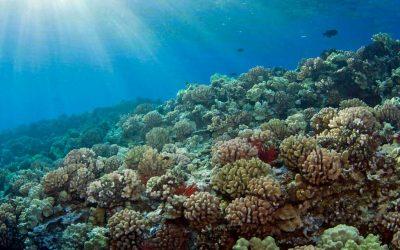 Hawái prohíbe las cremas solares que dañan los arrecifes de coral