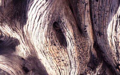 Plantar madera sin tierra ni luz solar para evitar talar árboles
