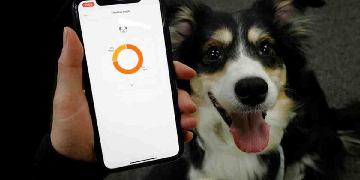 Inventan un collar para perros que traduce sus ladridos en emociones