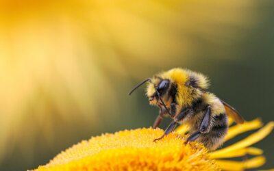 La colmena inteligente capaz de cuidar a millones de abejas