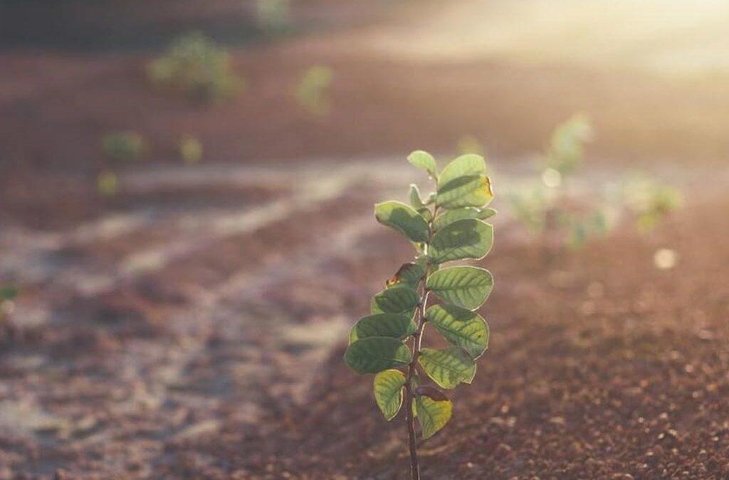 Treedom: comprar árboles solidarios para plantarlos alrededor del mundo
