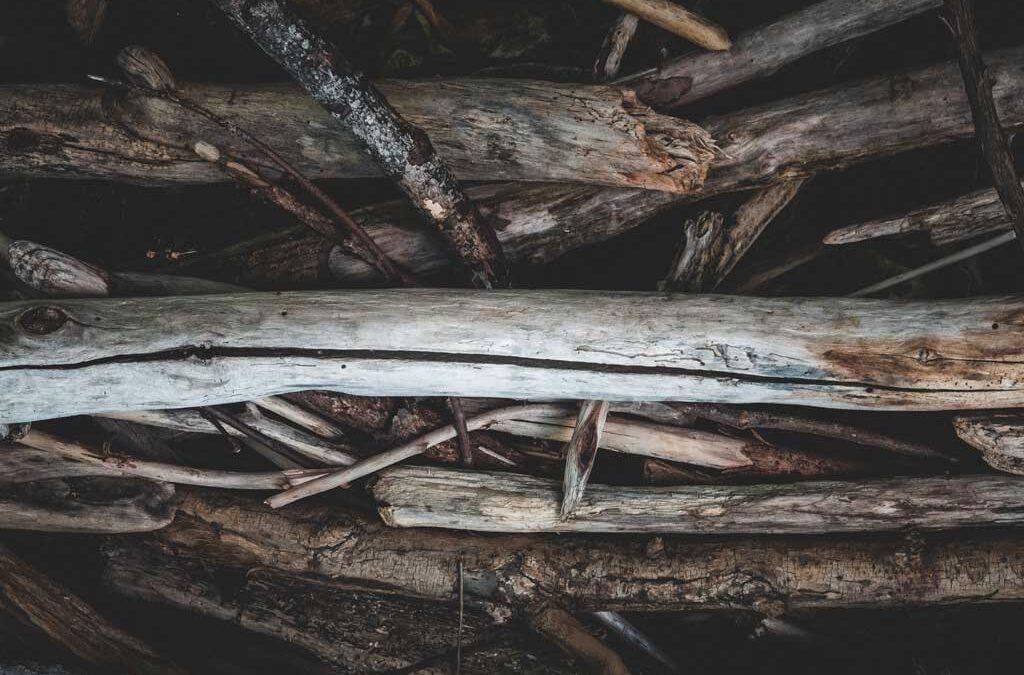 Crean bioplástico más resistente y sostenible utilizando polvo de madera desechado