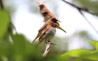 Estar cerca de las aves nos hace mucho más felices