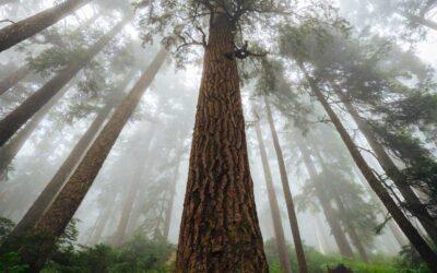 Descubren nuevo santuario de árboles gigantes en la selva amazónica