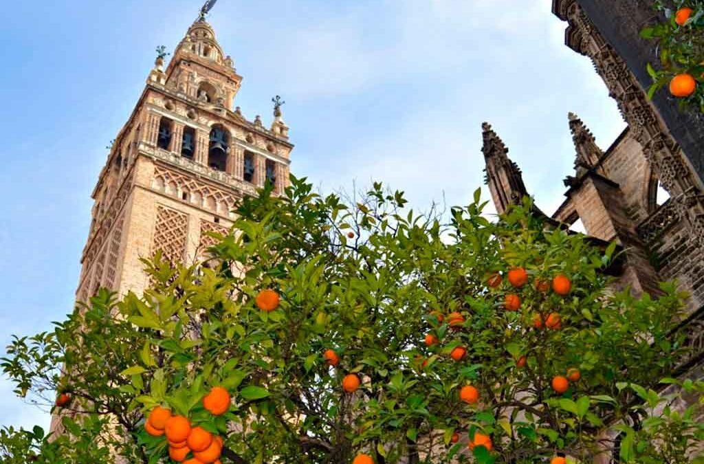 Sevilla comenzará a producir electricidad a partir de naranjas
