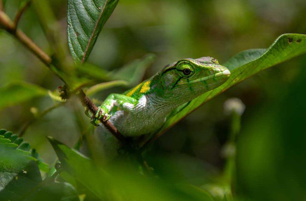 Los beneficios económicos de la biodiversidad equivalen al doble del PIB mundial
