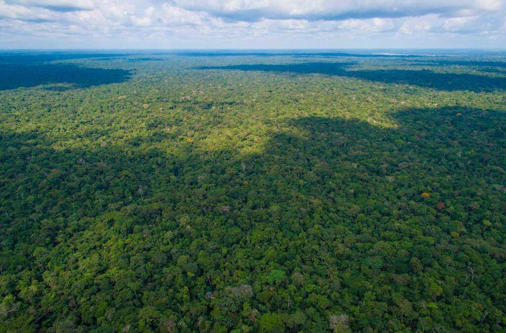 Brasil plantará 1.700 millones de árboles, la mayor reforestación de la historia