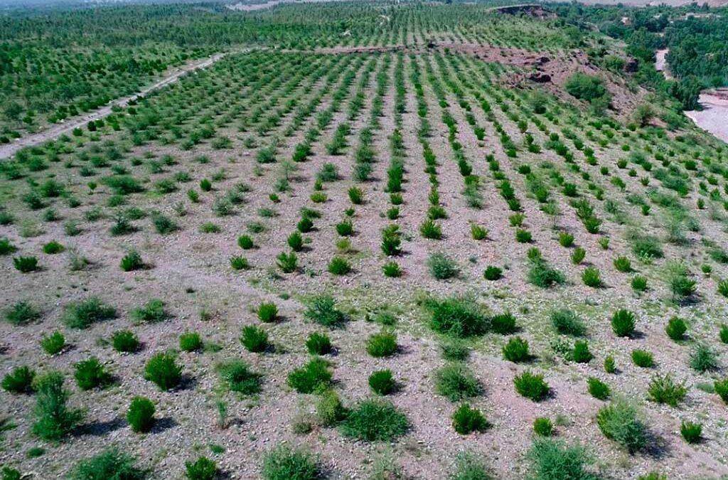 10 mil millones de árboles restaurarán los bosques de Paquistán