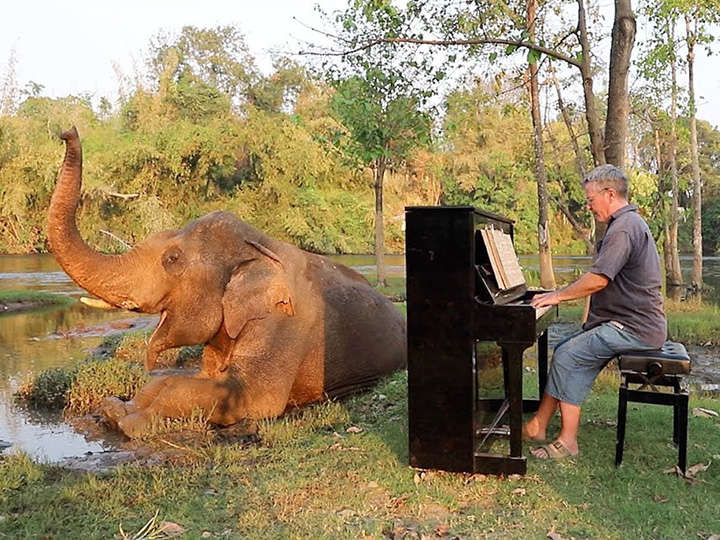 Conciertos de piano privados para un elefante rescatado