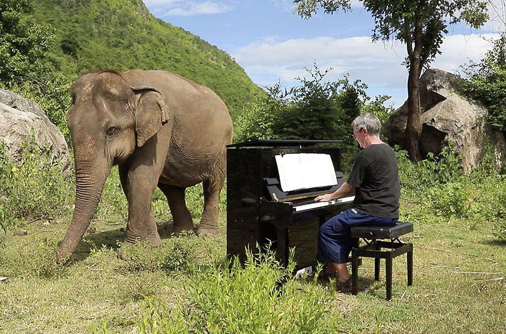 El elefante rescatado que disfruta de conciertos de piano
