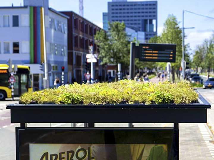 Holanda crea refugios para abejas en las paradas de autobús