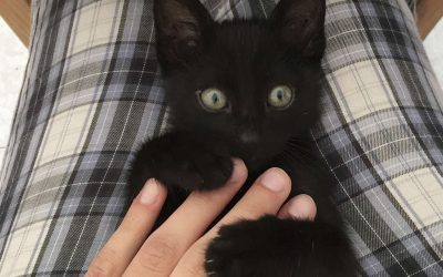 El gato es el único animal con tres días internacionales