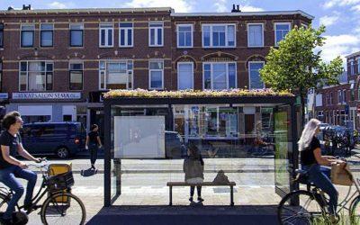 Holanda construye refugios para abejas en las paradas de autobús