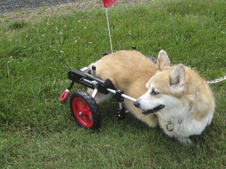 Sillas de ruedas para animales que cambian vidas