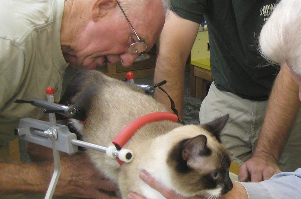Un veterinario jubilado hace sillas de ruedas para animales