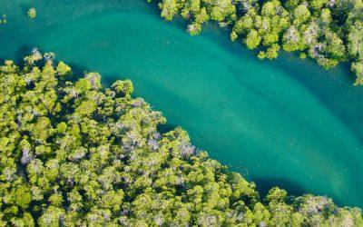 La donación más grande de la historia para la conservación de la naturaleza