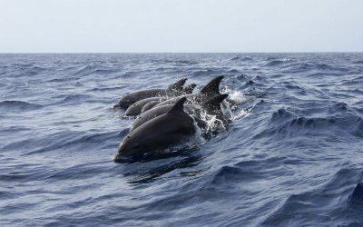 Unos delfines ayudan a rescatar a un hombre perdido durante 12 horas