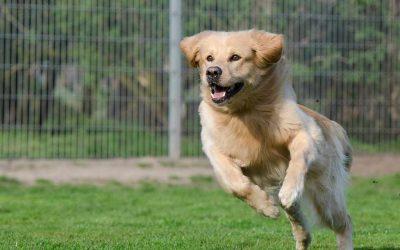 La nueva ley de bienestar animal que buscará el abandono 0