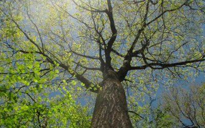 Investigadores conectan árboles a Twitter para salvar los bosques